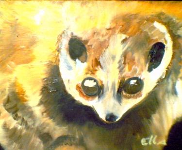 Pygmy loris by Ella Millard