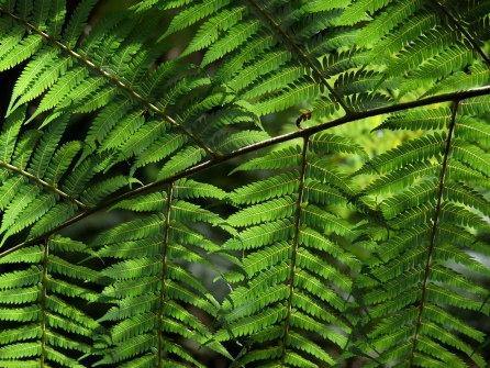 Backlit fern, NZ