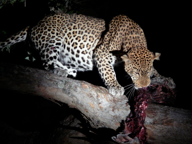Nocturnal feast