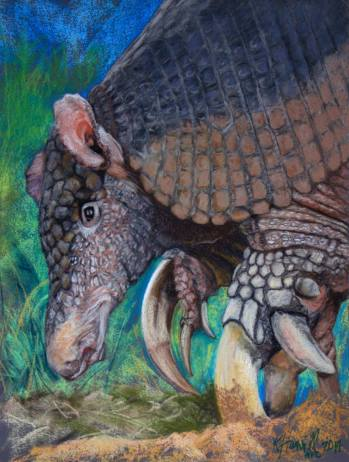 Illustration of giant armadillo by Kitty Harvill http://www.natureartists.com/kitty_harvill.asp
