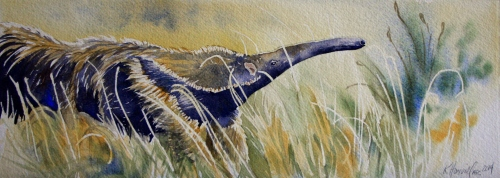 Illustration of giant anteater by Kitty Harvill www.natureartists.com/kitty_harvill.asp
