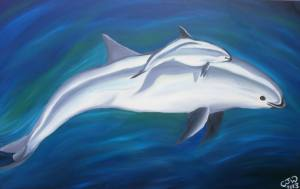 Vaquitas by Chloe Waterfield