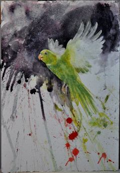 white_winged_parakeet_john_halbert